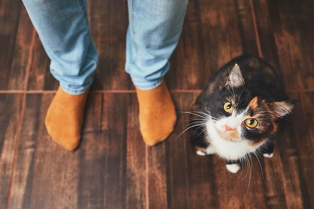 虎斑猫现身员工餐厅乖巧排队 网惊喜:比人懂礼貌